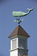 New Orleans Scenes Art - View Of A Sperm Whale Weathervane by Darlyne A. Murawski