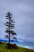 Cannon Beach Art - View of Cannon Beach from Ecola State Park by David Patterson