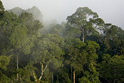 Danum Valley Conservation Area Prints - View Of Lowland Rain Forest In Borneo Print by Tim Laman
