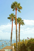 Trees - View Of Marina by Ben and Raisa Gertsberg