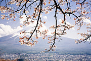 Cherry Blossom Prints - View Of Mt Fuji Print by Jdphotography