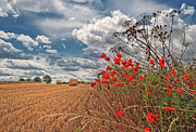 Field. Cloud Prints - View Of Summer Landscape Print by All images taken by Steve Cole