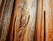 Quebec Photos - View Of Wooden  Ply by Veronique Regimbal photographie