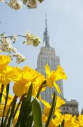 Views Of The Empire State Building And Print by Axiom Photographic