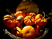 Wicker Baskets Prints - Vignette Photo of Small Pumpkins in a Wicker Basket at the Market - Fall Harvest in Autumn Colors Print by Chantal PhotoPix