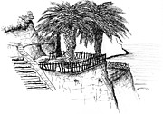 Water Town Drawings - Villa Rufolo Garden by Elizabeth Thorstenson
