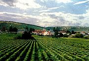 Vineyard Landscape Originals - Village In The Vineyards of France by Nancy Mueller