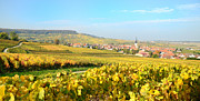 Champagne Framed Prints - Village Of Chamery In Champagne Area Framed Print by Martial Colomb