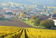 Champagne Metal Prints - Village Of Cuis In Champagne Area, Metal Print by Martial Colomb