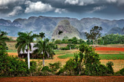 Locations Photo Framed Prints - Vinales. Pinar del Rio. Cuba Framed Print by Juan Carlos Ferro Duque