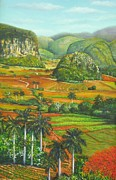 Del Rio Paintings - Vinales Valley with Royal Poinciana Tree by Miguel Alfaro