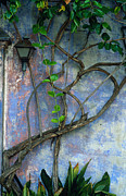 California Prints Prints - Vine and Wall Print by Kathy Yates