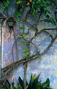 Kathy Yates - Vine and Wall