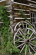 Wagon Wheels Photos - Vine Covered Wagon Wheels by Wendy White