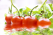 Simon Bratt Photography LRPS - Vine tomatoes and salad with water