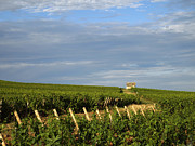 Burgundy Photos - Vines in Burgundy. France by Bernard Jaubert