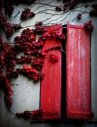 Lainie Wrightson Posters - Vines on Red Shutters Poster by Lainie Wrightson