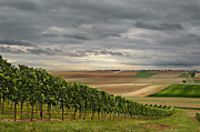 Winemaking Photos - Vineyard And Harvested Fields by Elisabeth Schmitt