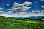 Finger Lakes Posters - Vineyard And Lake Poster by Steven Ainsworth