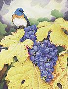 Vineyard Drawings Prints - Vineyard Blue Print by Amy S Turner