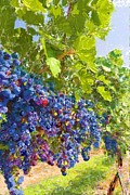 Vineyard Landscape Mixed Media Prints - Vineyard Print by Donna Johnson