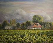 Vintner Painting Posters - Vineyard Fog Santa Rosa Poster by Edward White