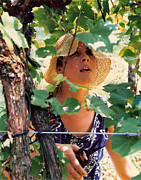 Light-weave Floppy Hat Prints - Vineyard Harvest Print by Padre Art