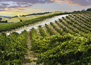 Grape Vineyard Prints - Vineyard Hills Print by Sharon Foster