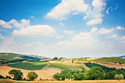 Vineyard Print by Just a click