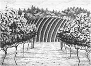 Vineyard Landscape Drawings Framed Prints - Vineyard Framed Print by Lawrence Tripoli