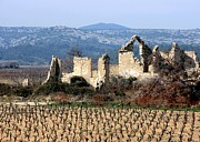 Carcassonne Prints - Vineyard Print by Luiz Felipe Castro