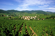 Wine Vineyard Framed Prints - Vineyard of Beaujolais in France Framed Print by Bernard Jaubert