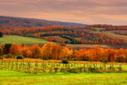 Fall Scenes Photos - Vineyard of Sunset by Emily Stauring