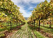 Vineyard Digital Art Framed Prints - Vineyard Framed Print by Paul Bartoszek