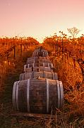Barrels Prints - Vineyard Rows Print by Owen Ashurst