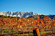 Vineyard Snow Topa Print by Kristine Ellison