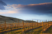 Vineyard Landscape Posters - Vineyard Storm Poster by Mike  Dawson