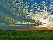 Sauvignon Prints - Vineyard Sunset I Print by William Fields