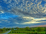 Wine Vineyard Photo Originals - Vineyard Sunset II by William Fields