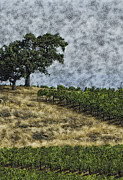 Gilbert Artiaga Posters - Vineyard Tree Poster by Gilbert Artiaga