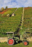Mountainside Framed Prints - Vineyard with tractor Framed Print by Matthias Hauser