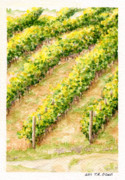 Syrah Paintings - Vineyard6 Small by TR ODell