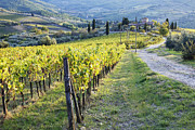 Chianti Hills Photo Framed Prints - Vineyards and Farmhouse Framed Print by Jeremy Woodhouse