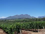 Wineries Prints - Vineyards Cape Town Print by Vijay Sharon Govender