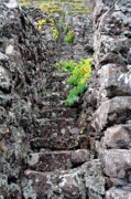 Grapevines Photos - Vineyards in Azores islands by Gaspar Avila