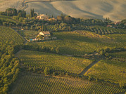 Brunello Art - Vineyards Surround Villas by Michael S. Lewis