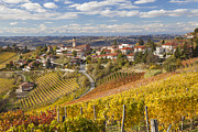 Winemaking Photos - Vineyards, Treiso, Langhe, Piedmont, Italy by Peter Adams