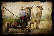 Vintage Amish Life D0064 Print by Wes and Dotty Weber
