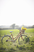 Bicycle Basket Prints - Vintage Bike In Countryside With Fresh Daffodils Print by Dougal Waters