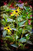 Organic Digital Art Originals - Vintage Black-eyed Susans by Rich Leighton